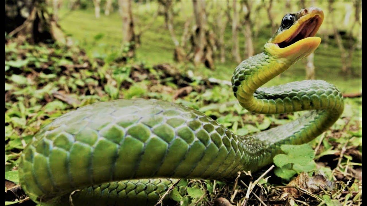 die gefährlichsten tiere des amazonas doku  youtube