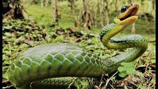 Die gefährlichsten Wassertiere des Amazonas [Doku]
