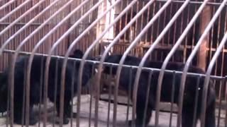Медвежьи разборки в зоопарке Алматы(, 2012-11-18T12:48:15.000Z)