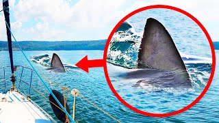 水面から覗くヒレはサメじゃない?