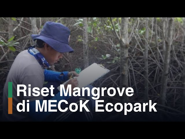 Riset di MECoK Ecopark, Ekowisata Mangrove Pertama di Jepara