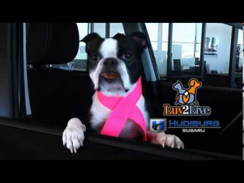 Boston Terrier Commercial - Hudiburg Subaru