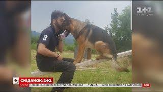 Італійці оплакують собаку-героя, який рятував людей після страшних землетрусів
