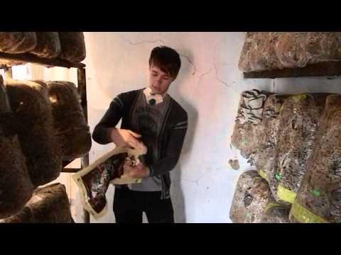 О компании / Выращивание грибов в домашних условиях