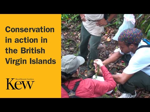 Conservation in action in the British Virgin Islands
