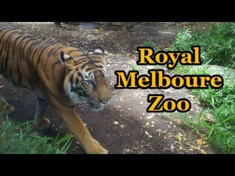 Day Out at The Royal Melbourne Zoo