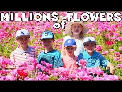 giant-flower-maze