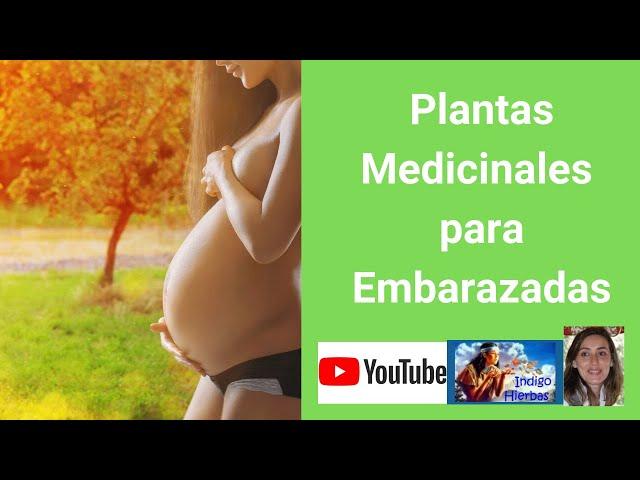 Plantas medicinales para embarazadas