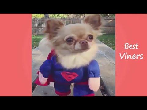 Top 100 Funny Animals Vines 2016