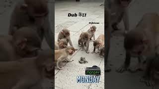 Monkey comedy videos | reels video | popular videos | reels | Instagram videos | funny video |
