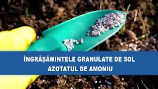 Îngrășămintele granulate de sol: Azotatul de amoniu