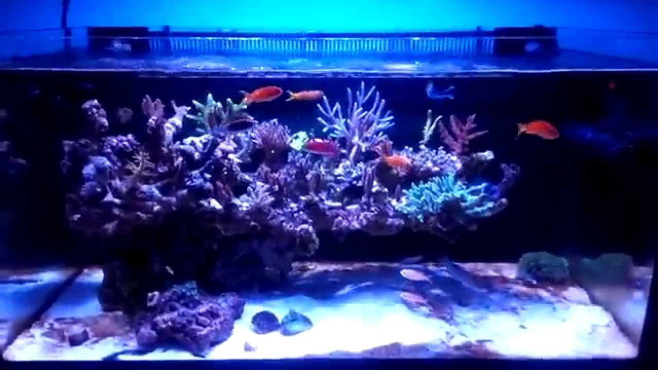 50gallon Floating Reef Youtube