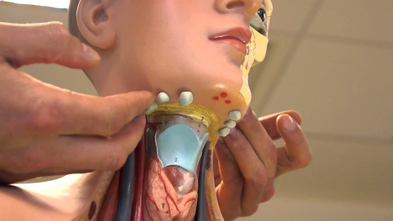Clinical Examination - Head and Neck Lymph nodes - YouTube
