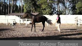 Natural Horsemanship in Ukraine