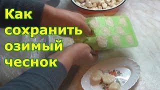 Заморозка чеснока – удобный и практичный метод длительного хранения