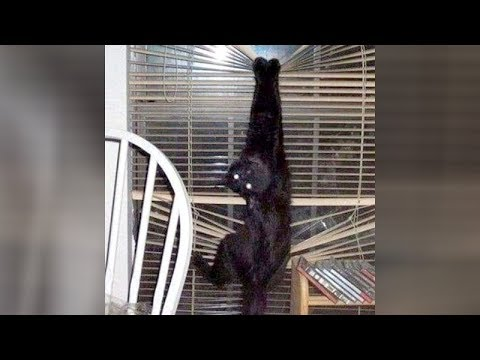 ANIMALS will NEVER LET YOU BE BORED! – Super HILARIOUS ANIMAL videos