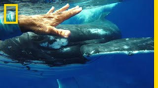 Was This Whale Trying to Save a Diver's Life? | National Geographic thumbnail