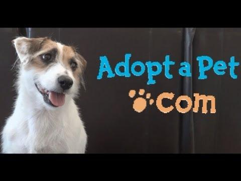 Jesse's Adopt-a-Pet.com Promo