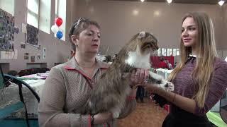 Выставка кошек в Хабаровске