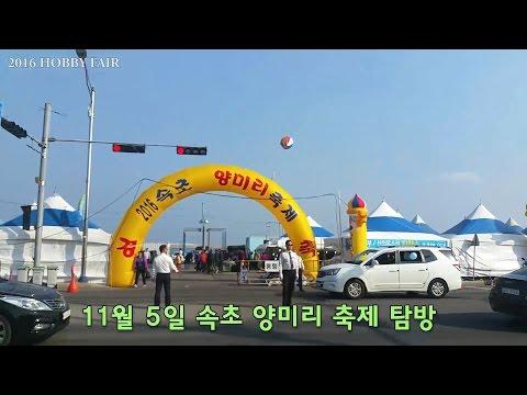 [161105] 속초 양미리 축제 탐방