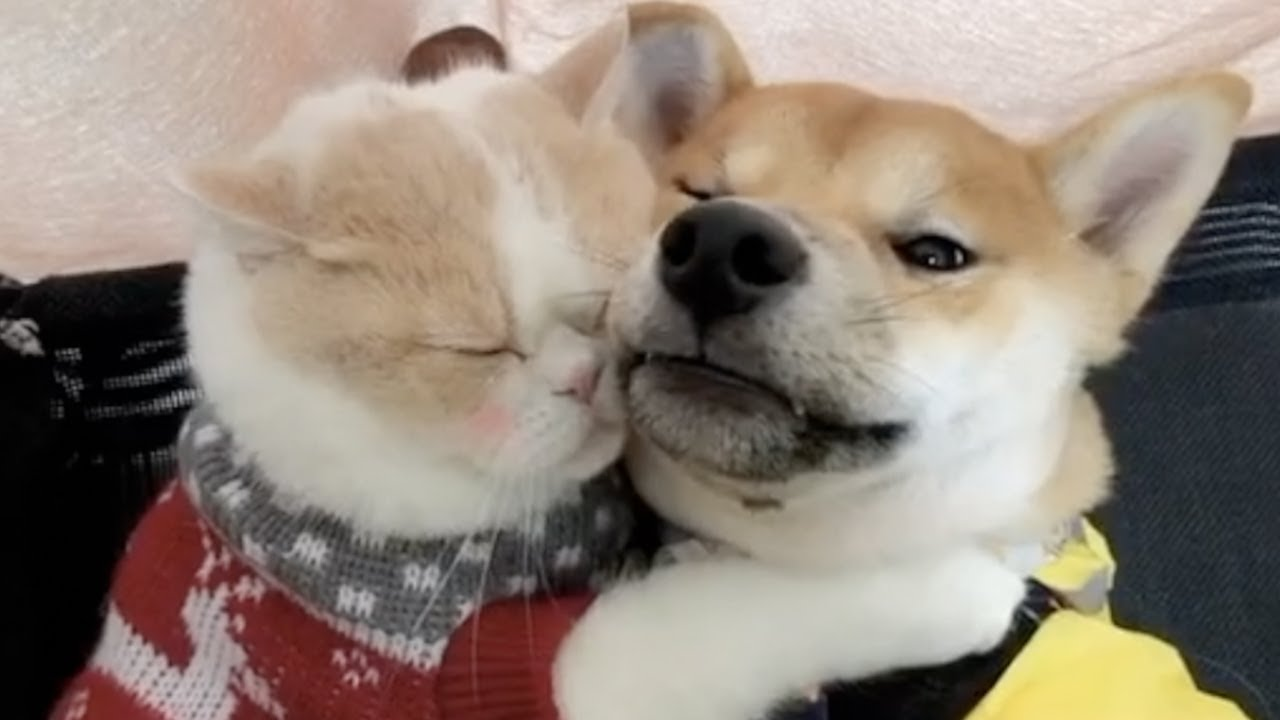 Funniest & Cutest Animals videos #2- Funny Puppy Videos 2019