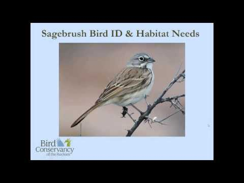 Birds in the Sagebrush Ecosystem
