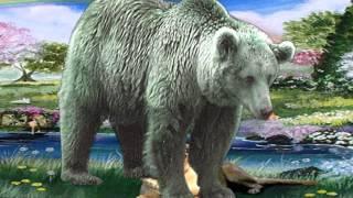 bear.avi
