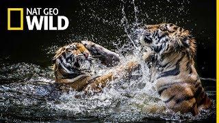 Oglądaj Walki zwierząt na kanale Nat Geo Wild