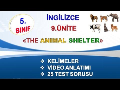 5.Sınıf İngilizce 9.Ünite The Animal Shelter Kelimeler Video Anlatım Test Soruları