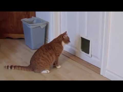 How (not?) to install a cat door & How (not?) to install a cat door - YouTube Pezcame.Com
