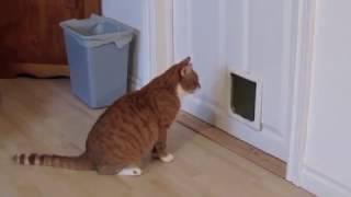 How (not?) to install a cat door