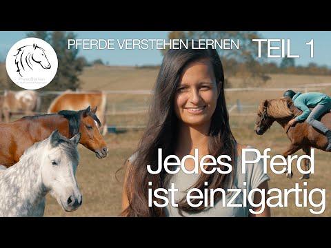 Pferde verstehen lernen – Jedes Pferd ist einzigartig. (Teil 1)