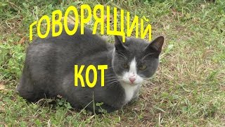 #Говорящий кот!(https://www.youtube.com/playlist?list=PLcM4uvUz_M3xQD_hVjArB5X6zLjp01nLJ - плейлист