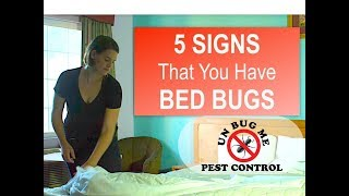 5 SIGNS You Have BED BUGS
