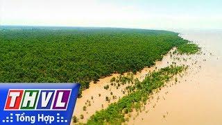 THVL l Ký sự truyền hình: Rừng bần cù lao Dung