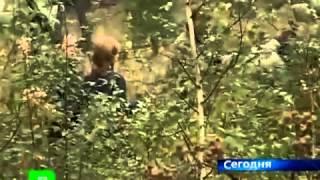 В овраге посреди леса нашли бочки с зародышами