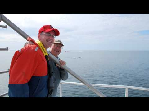 Using Satellites to Save Endangered Right Whales in the Gulf of Maine