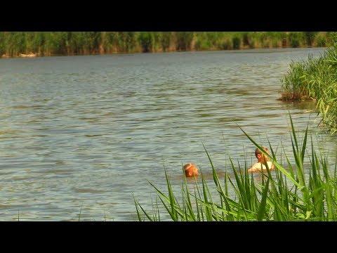 Правоохранители призывают родителей не оставлять детей без присмотра на водоемах