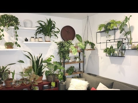 HOME OFFICE HOUSEPLANT TOUR