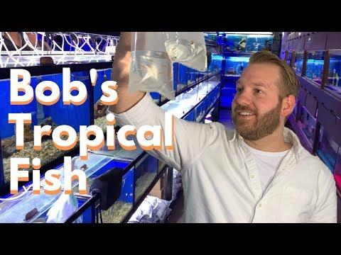 LFS Showcase: Bob's Tropical Fish