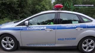 Кингисеппские полицейские «устроили засаду для лесных жителей»