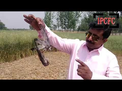 Rat Control || Rodent Control || Pest Control || Insect control || Pest control near me