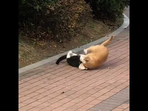 Stray cats fighting!don't fight with your partner even totally mad day!