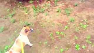 ある日公園でトットちゃん亀さんを見つけましたが、何やら得体の知らぬ...