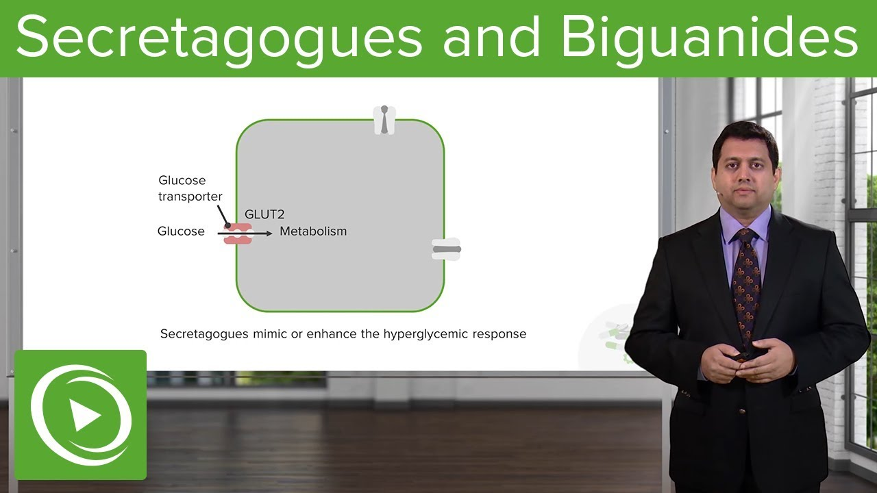 Secretagogues and Biguanides: Diabetes Medications – Pharmacology | Lecturio