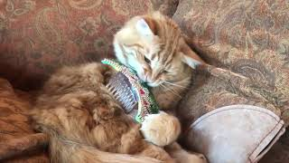 Funny Cat Attacks his St Patrick's Day Costume ~ Revenge for Cats Everywhere