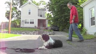 Ohio Dog Obedience Training - Cincinnati Ohio Dog Bootcamp  - Master Trainer -