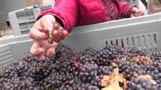 Wino wloskie - Concilio Wino 2014