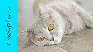 КОШКОТАЙМ - утренние кошачьи нежности моей кошки Леси / котобонус