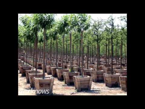 Oakridge Nursery Landscaping Brandon Sd 57005 7011